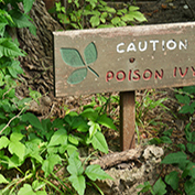 Sign in a poison ivy patch, warning about poison ivy.